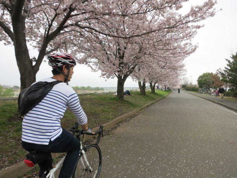 稲城市の桜