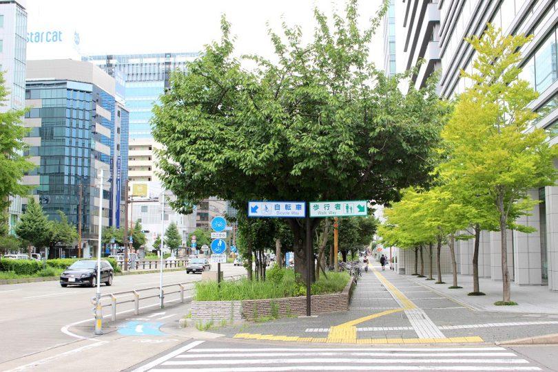 桜通の歩道と自転車レーン