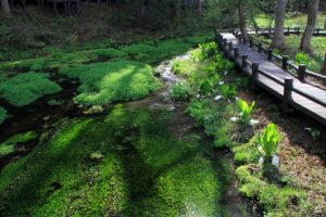 姫川源流流自然探勝園