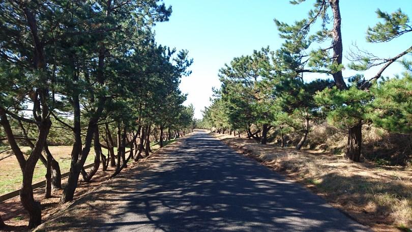 福ノ江の松並木