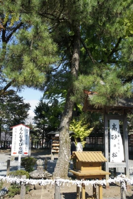高砂神社の松