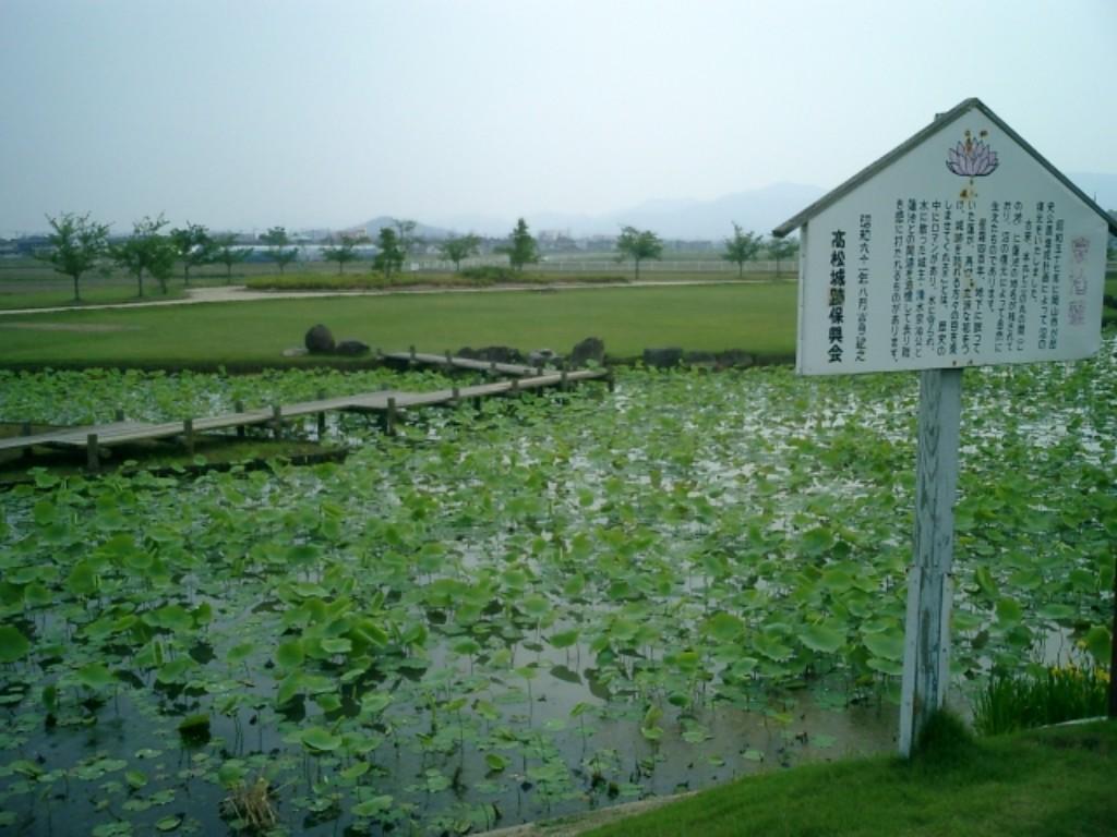 備中高松城跡 蓮の池