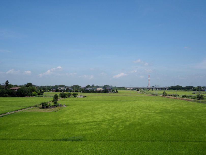 青々とした緑が広がる田んぼ