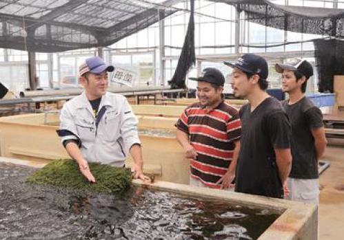 海ぶどう養殖場