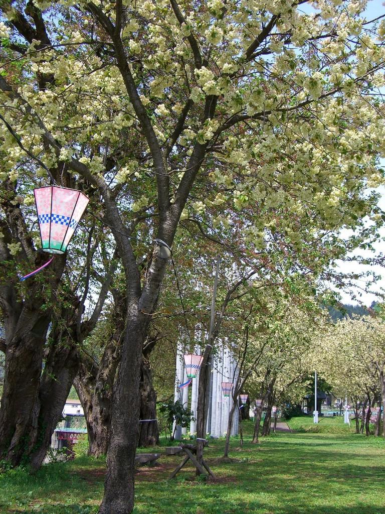 黄桜の丘公園