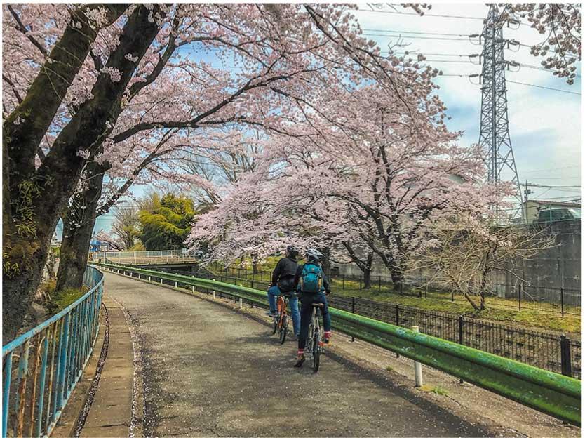 霞川ウォーキングコース