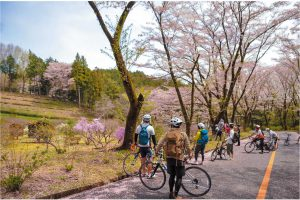 立正佼成会の桜並木