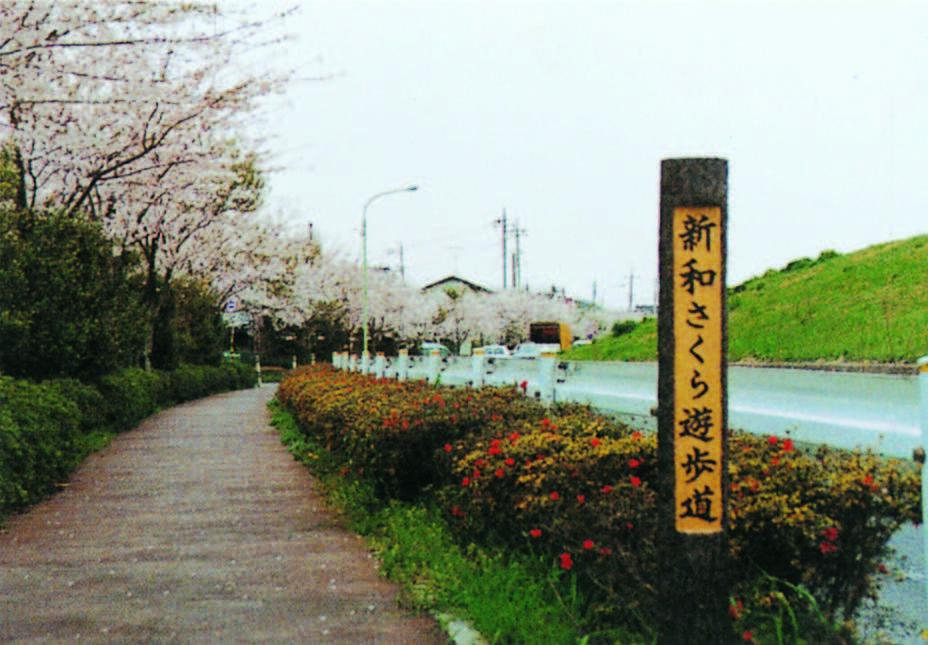 新和さくら遊歩道