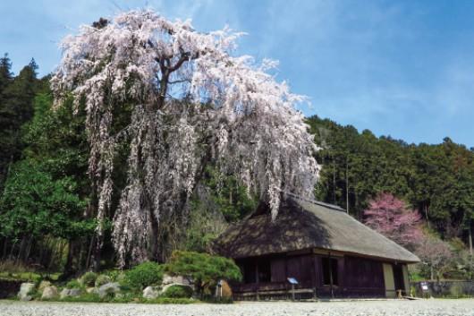 高麗神社と高麗家住宅
