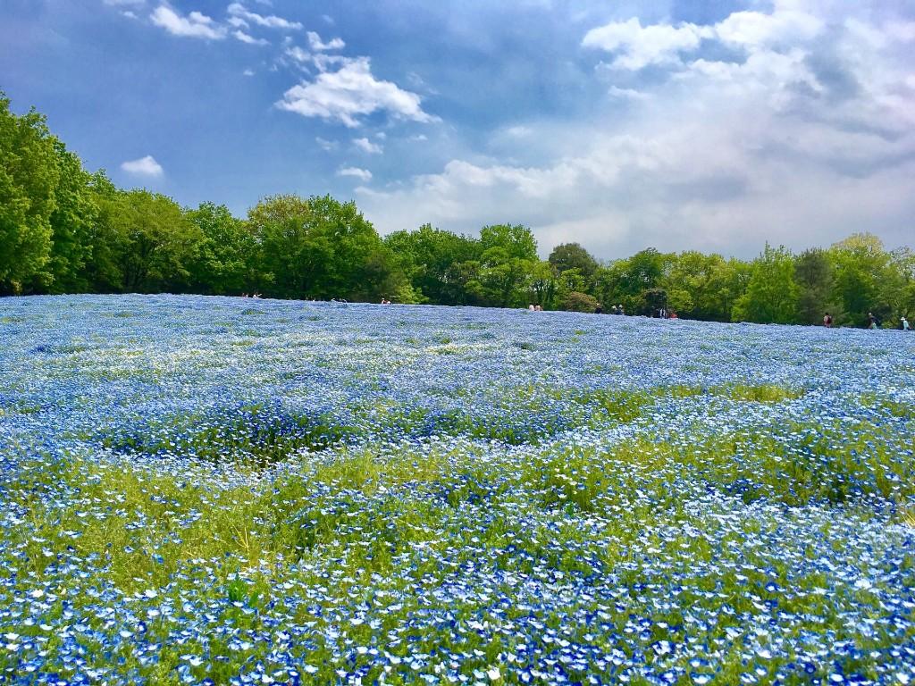 44.国営武蔵丘陵森林公園