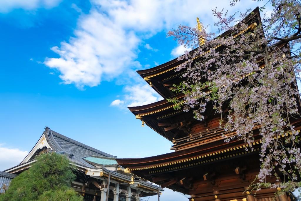 14_三学院の桜