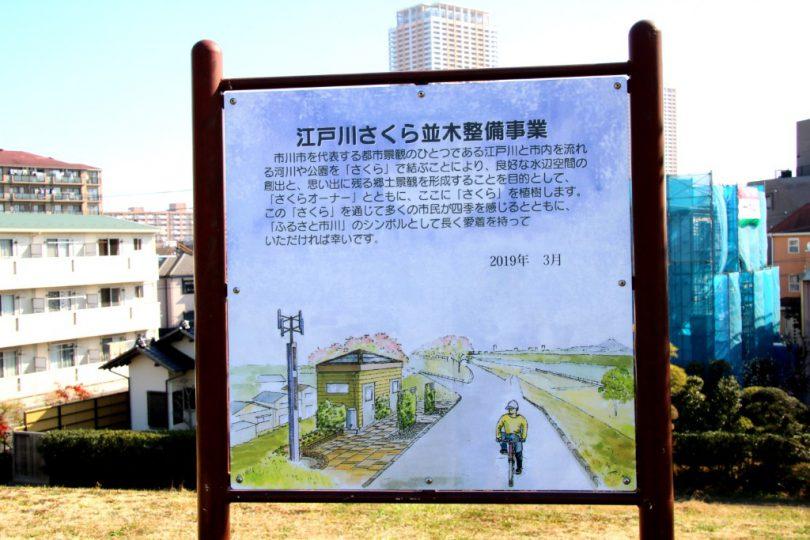 江戸川さくら並木整備事業の看板