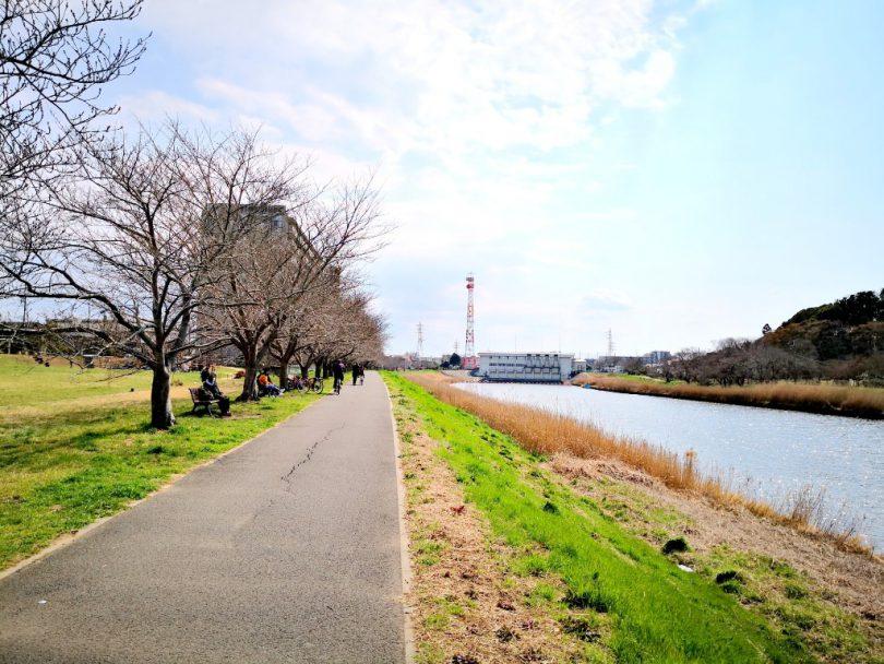 新川沿いの陽光の桜並木