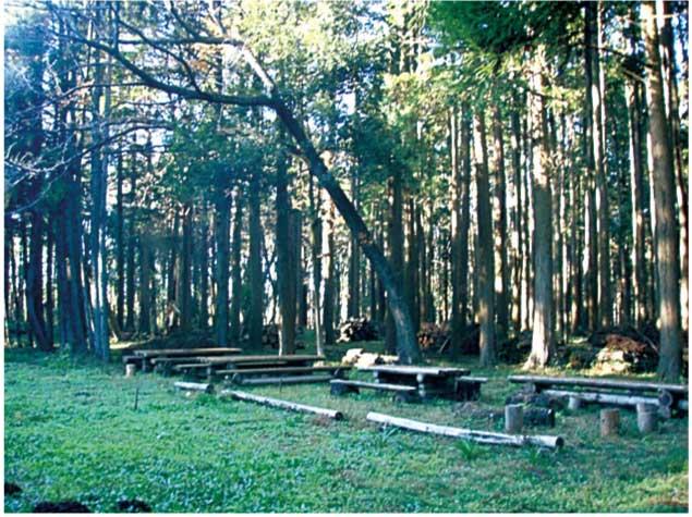 いずみの森2