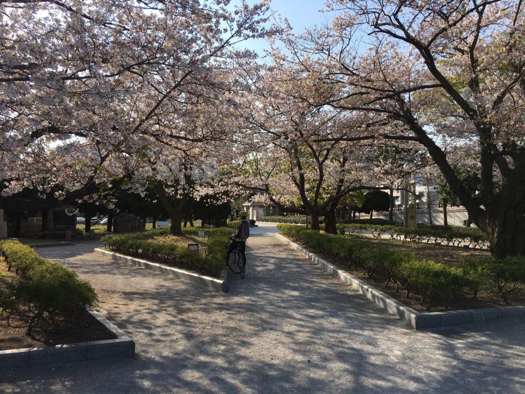 ヴェルニー公園 桜