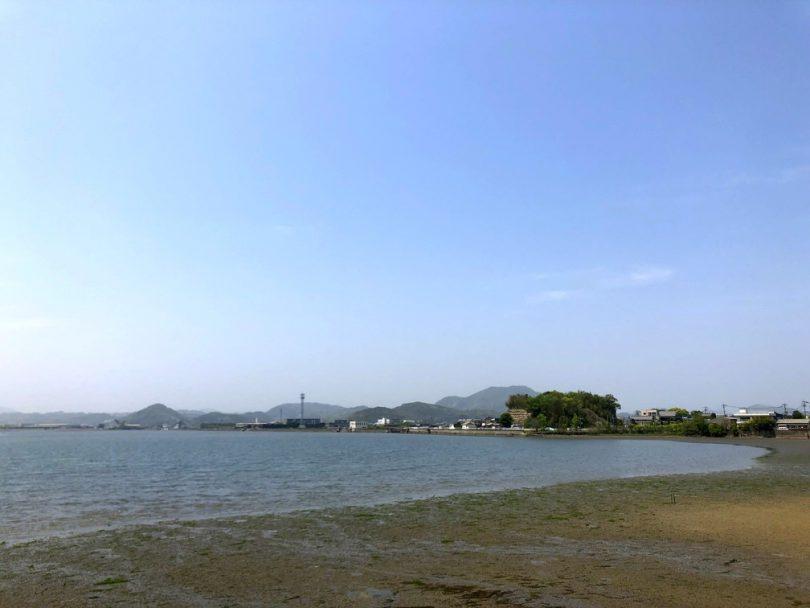 今津干潟、カブトガニ