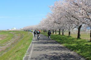 日野川桜つづみ公園