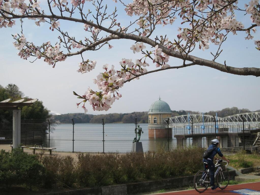 近隣のおすすめスポット「多摩湖の桜」