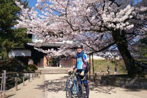 【桜・お花見サイクリング】茨城県のつくば霞ヶ浦りんりんロードの桜がスゴイ!!